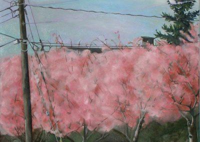 Sentinel Cherries